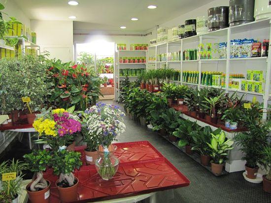 C mo montar una tienda de plantas for Como iniciar un vivero en casa