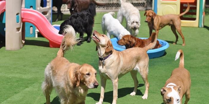 C mo montar una guarder a para perros for Ahuyentar perros del jardin