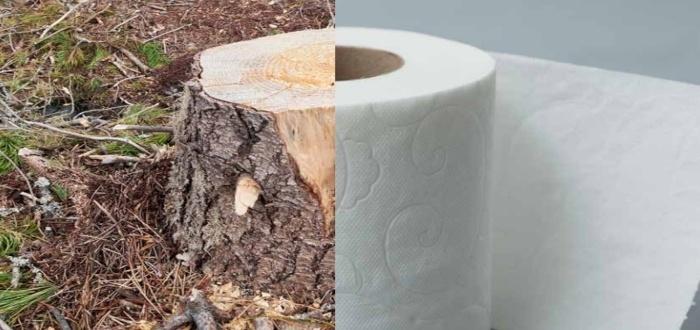 Materia prima para papel higiénico