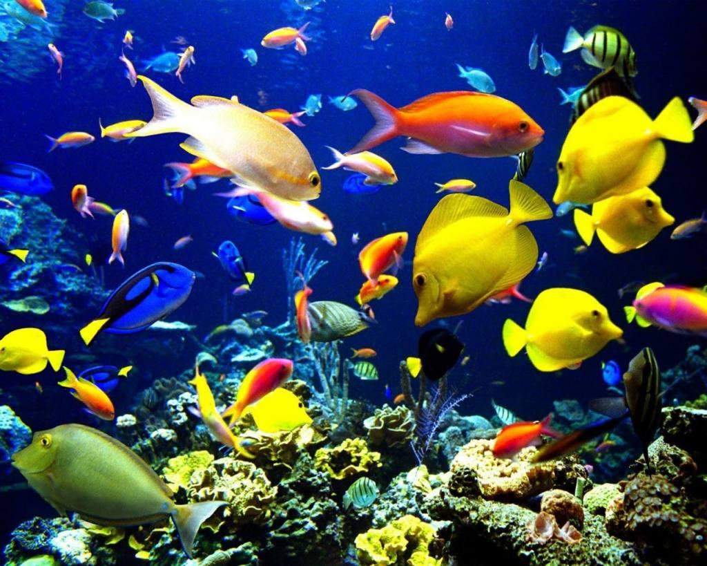 c mo montar una tienda de peces ornamentales
