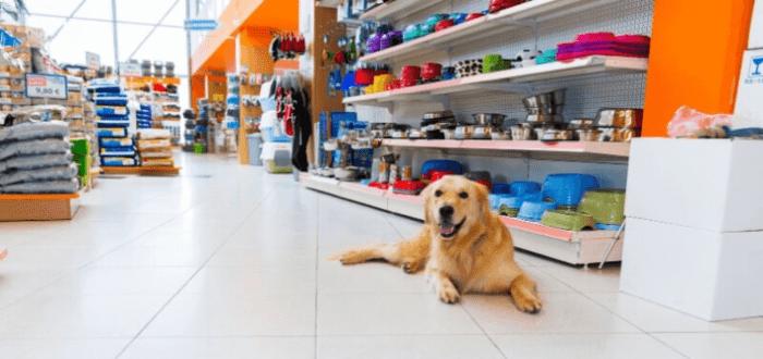 Negocios de mascotas: Un perro en una tienda de mascotas