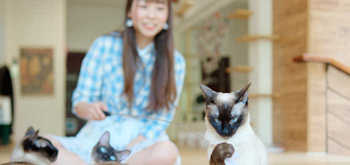 mujer-llevando-negocios-desde-casa-cuidado-de-mascotas