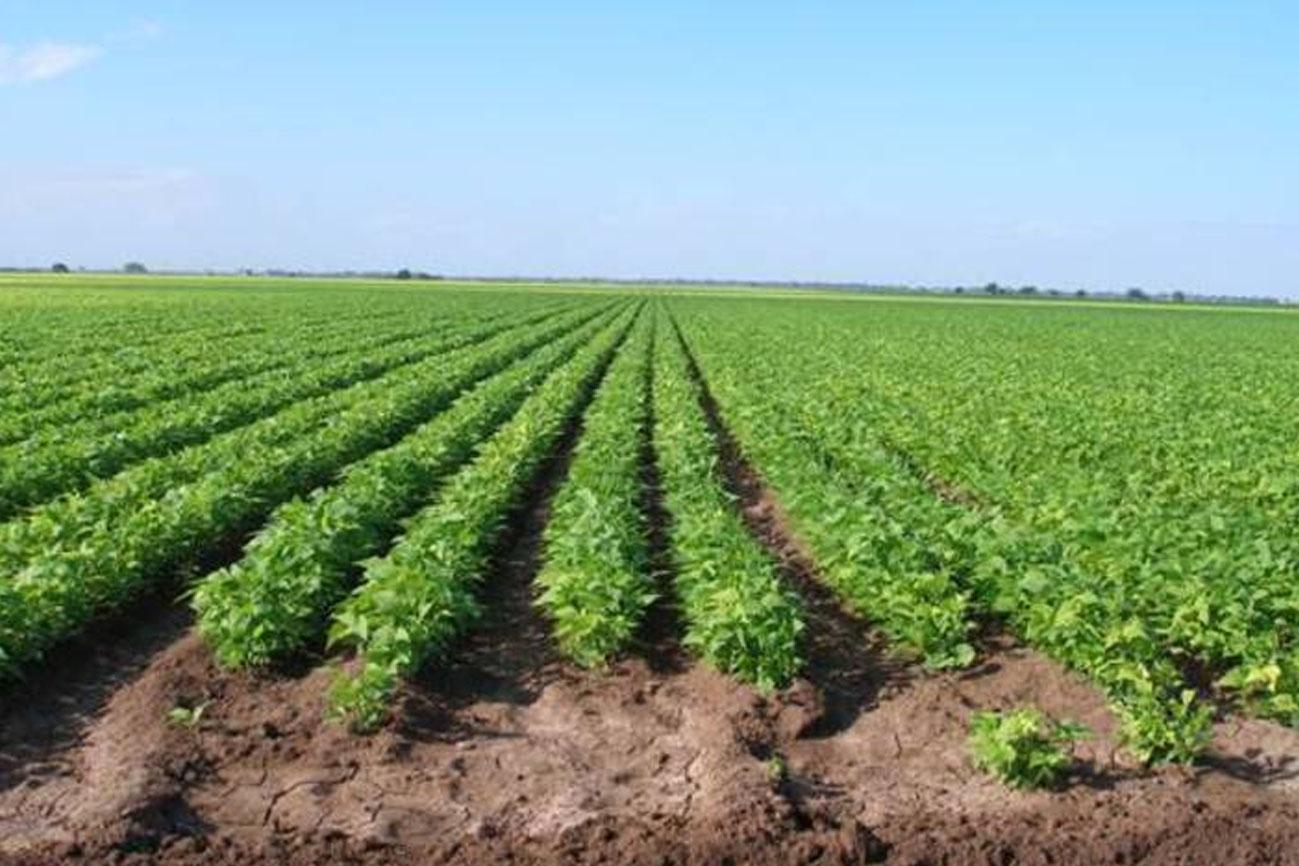 Ganar dinero con la siembra en su terreno