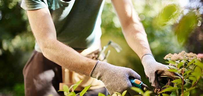 cuidador-de-jardines-ideas-de-negocios