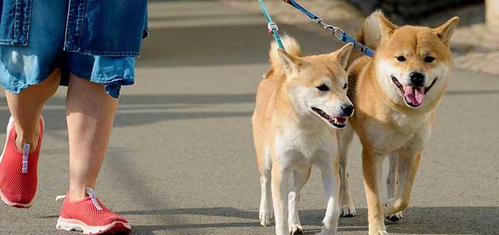 pasear-perros-ideas-de-negocios-para-jovenes-estudiantes