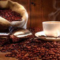 Cómo sembrar café: consejos de siembra, cultivo y comercialización