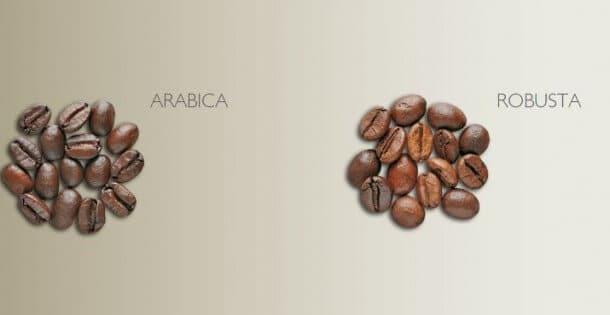 tipo de café: arábica o robusta