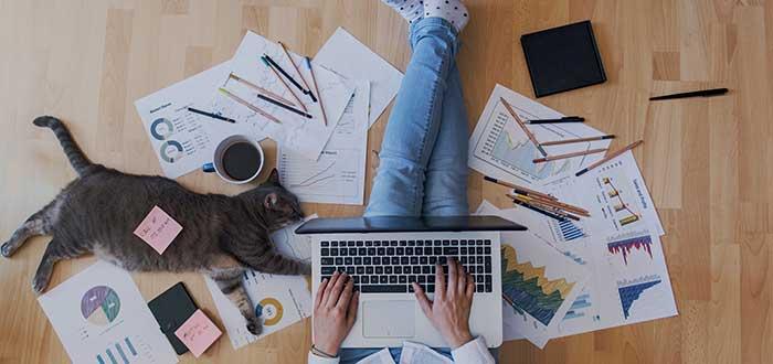 persona trabajando en casa con computador portatil sobre las piernas y un gato al lado