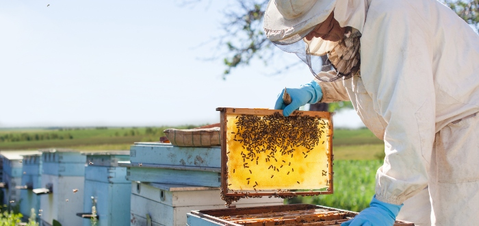 Negocios de agricultura, apicultura