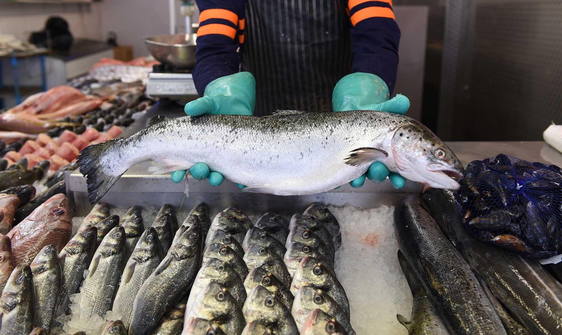 Cómo montar una pescadería | Iniciar un negocio de pescados y mariscos