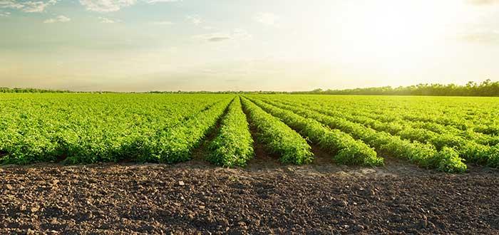 Qué cultivar en un terreno rústico