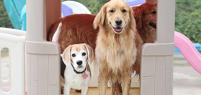 Pasos para abrir una guardería canina