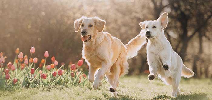 Presupuesto de una guardería canina