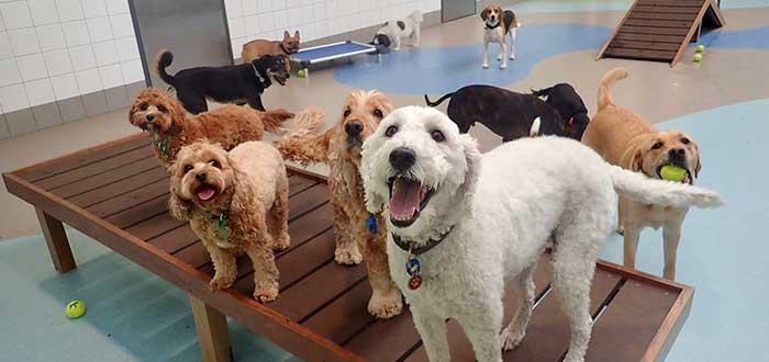 Requisitos para montar una guardería de perros